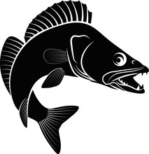 Clip Art Illustration Of Zander Fish