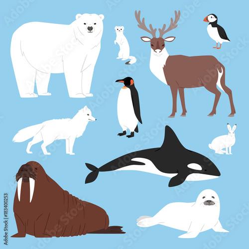 Fototapeta Arctic animals cartoon vector polar bear or penguin character collection with wh
