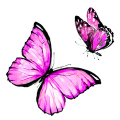 pink butterfly, watercolor, isolated on a white