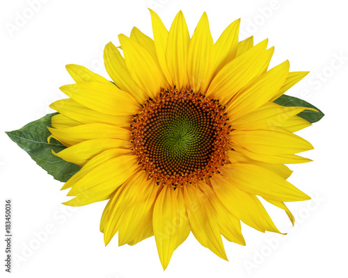 Deurstickers Zonnebloem Beautiful sunflower isolated on a white background.