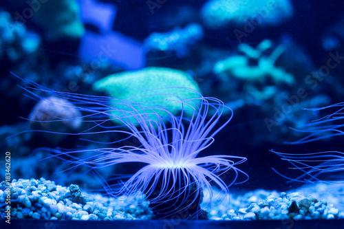 Plakat życie podwodne