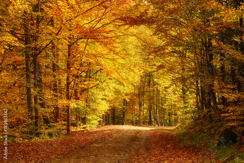Aluminium Prints Autumn Beautiful sunny autumn landscape with fallen dry red leaves, road through the forest and yellow trees
