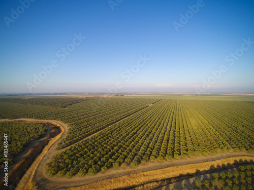 Valokuva  Beautiful aerial view of large almond orchard