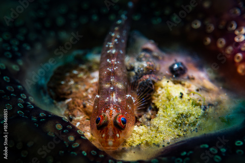 Fish with eggs - Buy this stock photo and explore similar images at
