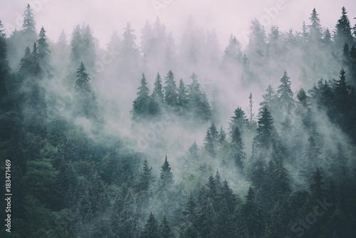 mglisty-krajobraz-z-jodly-lasu-w-stylu-retro