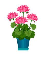 Geranium Houseplant In Flower Pot