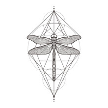 Black Dragonfly Aeschna Viridl...