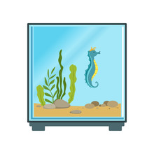 Colorful Illustration Of Cube Aquarium With Blue Sea Horse And Decorations Various Seaweed And Stones. Cartoon Vector Icon For Logo Or Flyer