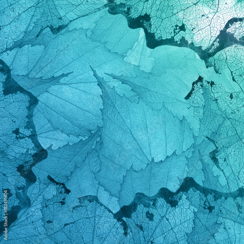 cyan background from transparent leaves Canvas Print