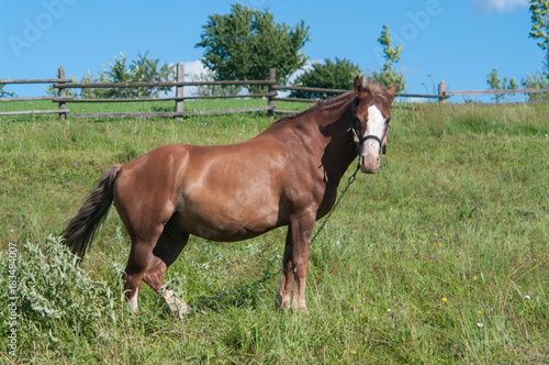 Photo  Lonely horse is grazing off the grass in a village