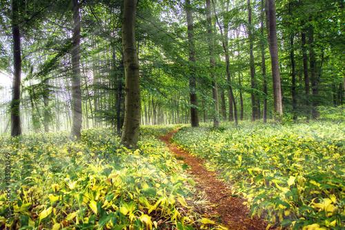 Papiers peints Forets Pfad durch Märchenwald