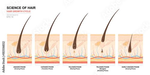 Fotografie, Obraz  Anatomical training poster