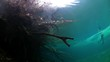Yucatan cenotes underwater in Mexico. Scuba diving in clean water.
