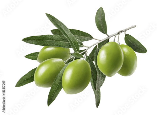 Photo sur Toile Graine, aromate Long olive branch isolated on white background