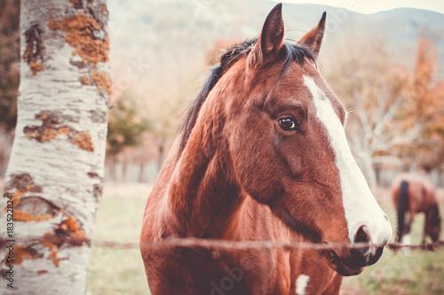 Fototapeta cavallo in primo piano obraz