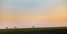 Roe Deers Running On Field