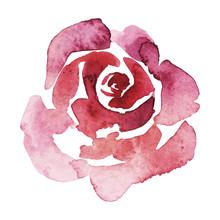 Vector Pink Rose Watercolor Ha...