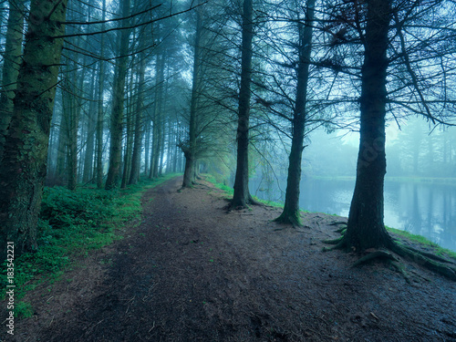 foggy forest morning,Northern Ireland
