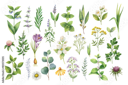 Fototapeta Hand drawn vector watercolor set of herbs, wildflowers and spices. obraz