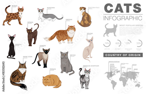 Fotografering  Cat breeds infographic template, vector icons