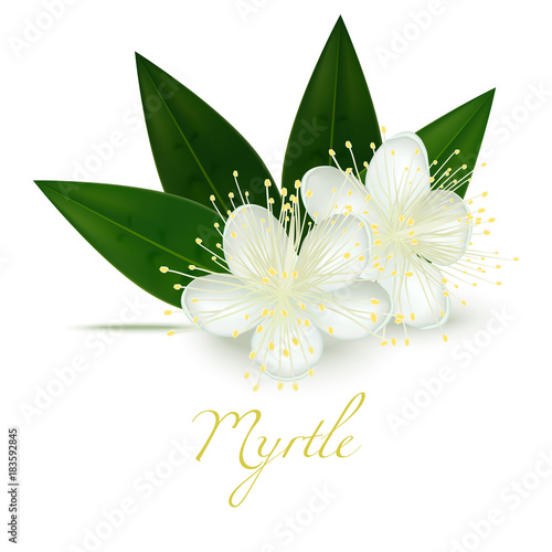 Fototapeta Myrtle Flowers and Leaves. Realistic Elements for Labels of Cosmetic Skin Care Product Design. Vector Isolated Illustration obraz
