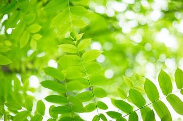 Fototapeta na wymiar green leaves with