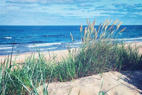 Obraz Green grass in sand dune at Baltic Sea in Palanga - fototapety do salonu