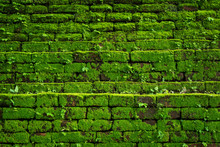 Green Moss Growing On Old Bric...