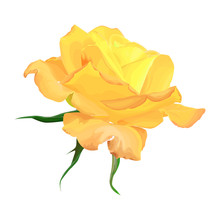 Yellow Rose On A White Backgro...