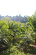 Thailand - Khao Sok - Nationalpark
