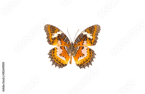collection of butterflies on white isolated background Poster