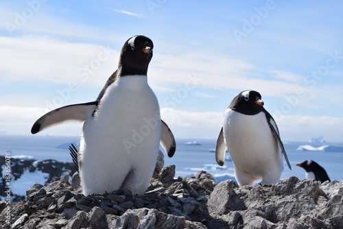 Foto op Canvas Pinguin antartica