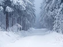 Winterlicher Wald Im Gebirge