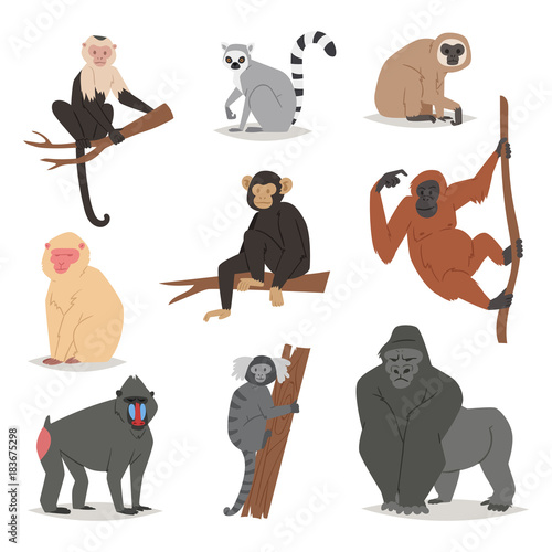 Fotografie, Obraz Monkey vector set cute animal macaque monkeyish cartoon character of primate chi