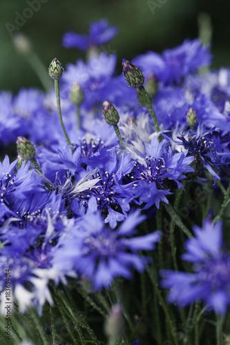 streszczenie-kwiat-zblizenie
