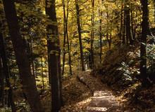 Forest Trail, Ottawa National ...