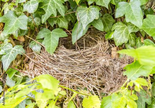 Fotografia, Obraz  birds nest closeup