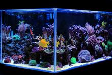 Coral Reef Saltwater Aquarium ...