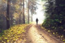 Person Walks In Autumn Seasona...