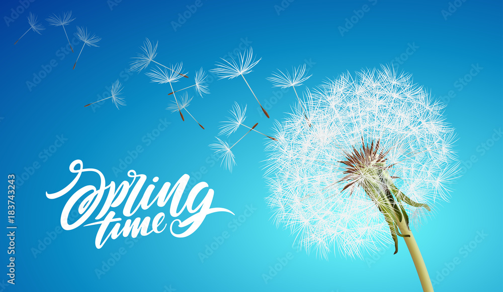 Fototapety, obrazy: Beautiful vector dandelion with flying seeds on cloudy sky