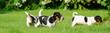 canvas print picture - Hundebabys, drei kleine Hundewelpen spielen im Garten