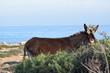 Wild donkey on the nature