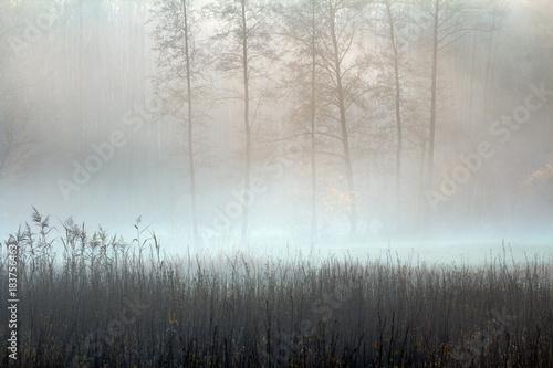Pastelowa Jesień i Mgła Fototapeta