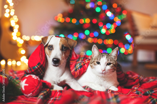 Foto op Canvas Kerstmis Cat and dog under a christmas tree