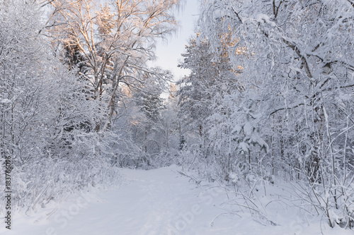 European Winter Landscape Trees Covered With Snow On Frosty