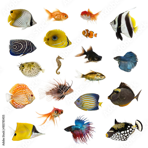 Large collection of fish, pet and exotic, in different position