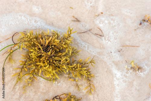 Seaweed on a sandy beach in Punta Cana, La Altagracia, Dominican