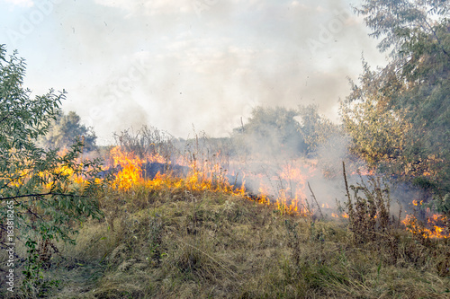Massive forest wildfire due to hot, dry and windy weather Canvas Print
