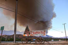 Christmas Trees Selling Sign  During The Thomas Fire In Ventura County Wildfire. A Wildfire Is An Uncontrolled Fire That Is Wiping Out Large Fields And Areas Of Land.
