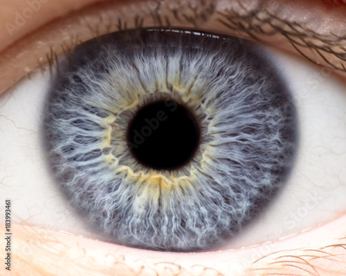 Macro photo of human eye, iris, pupil, eye lashes, eye lids. Wallpaper Mural